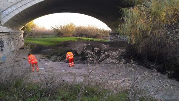 Trabajos de limpieza en márgenes del río Guadalquivir