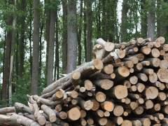 Incentivar la biomasa podría crear 12.600 empleos