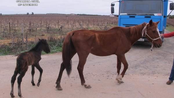Localizan en Chucena a once equinos abandonados y desnutridos.