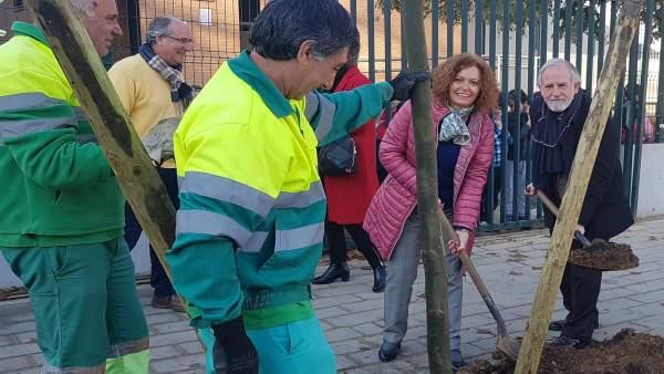 Arrancan las plantaciones en Este-Alcosa-Torreblanca.