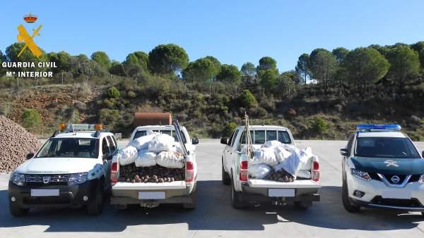 Vehículos con las piñas recuperadas en Villaviciosa