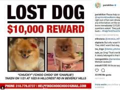 Paris Hilton: 10.000 dólares por dar con el perro de un amigo