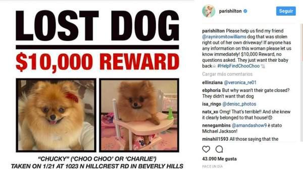 Paris Hilton busca al perro de un amigo