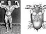 La mosca Schwarzenegger