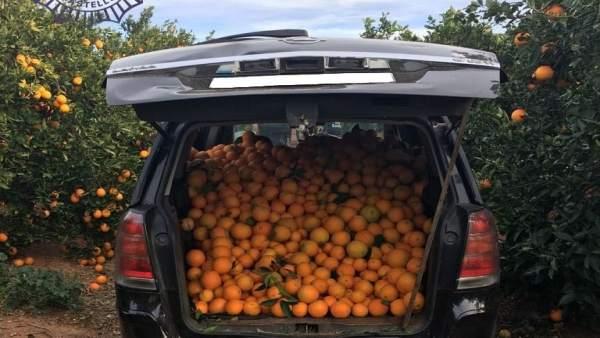 Investigat un home per sostraure 1.000 quilos de taronges en una parcel·la del camí Collet de la Marjalería (Castelló)