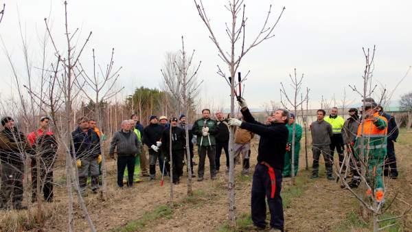 Curso de poda en el vivero de la Diputación de Huesca