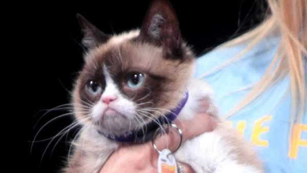 'Gumpy Cat'