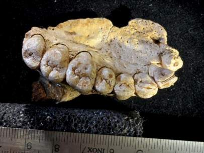Mandíbula de Misliya (Homo sapiens)