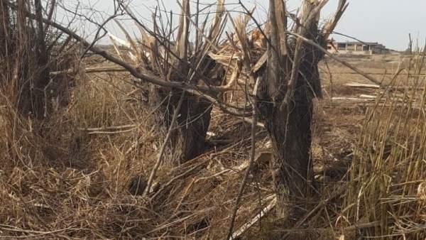 Imagen de la zona en la que han aparecido los árboles cortados