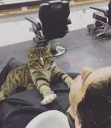 Una gata que trabaja en una peluquería de Australia, ayuda a reducir el estrés de sus clientes.