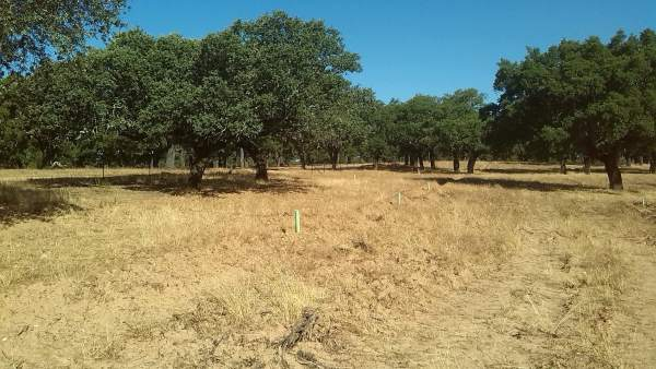 Dehesa Extremadura