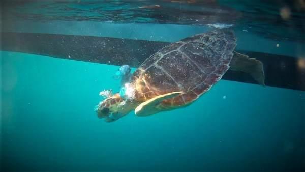 Palma Aquarium libera dos tortugas
