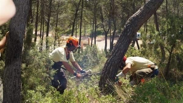 Agricultura alça la prohibició excepcional de cremes en zona forestal