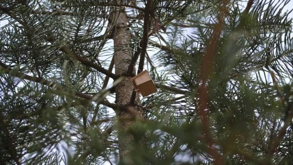 Uno de los nidos para gorriones
