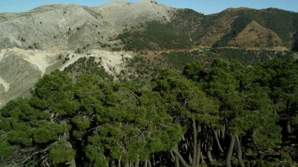 Sierra Bermeja, en Málaga