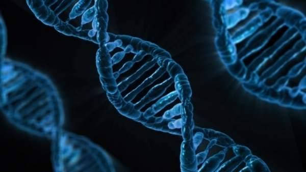 El 71% dels espanyols té sang valenciana en els seus gens, segons 24Genetics