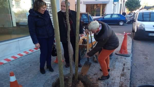 Plantación de árboles en Nervión, en Sevilla