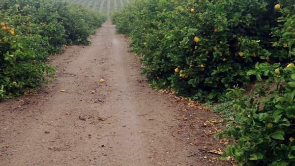 Imagen de uno de los huertos investigados