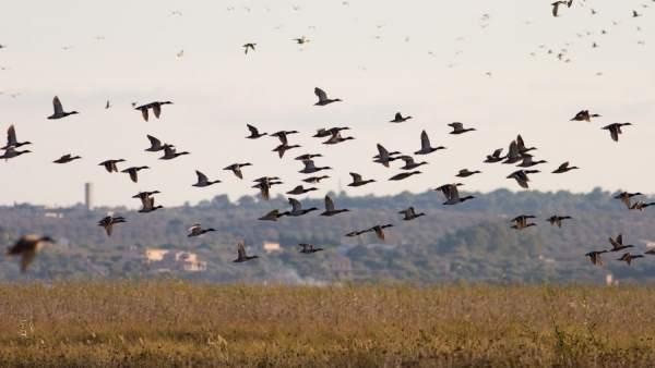 Aves en zonas húmedas