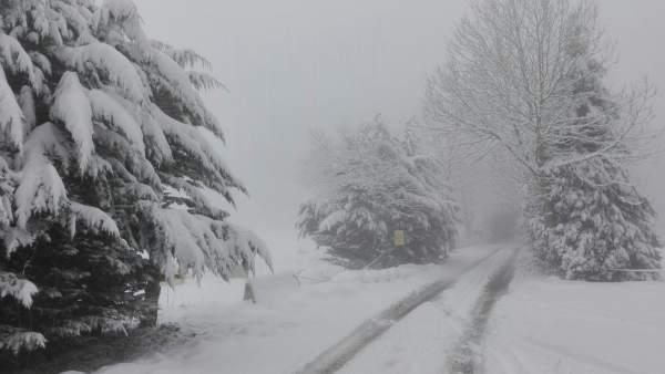 Barazar nieve