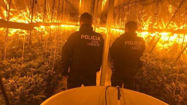 Plantación de marihuana en Cheste