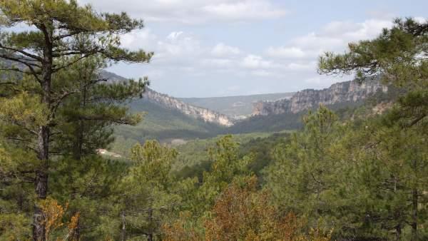 Bosque El Hosquillo, Cuenca