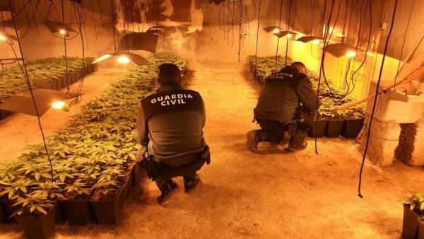 Plantación de marihuana desmantelada en una nave agrícola