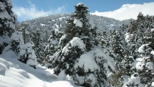 Pinsapar del Parque Nacional Sierra de las Nieves