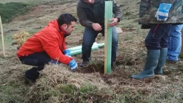 Plantación de árboles