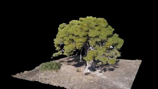 El Gobierno de Aragón muestra en 3D los árboles monumentales de la comunidad.