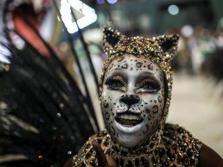 Samba felina