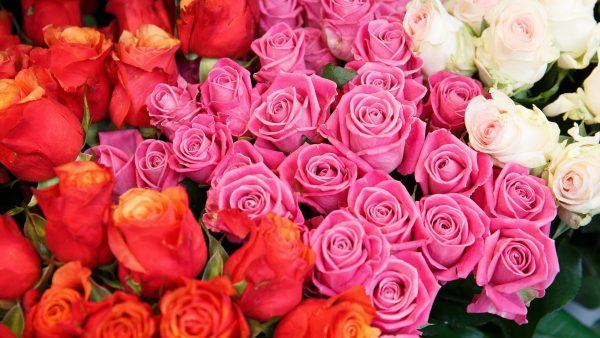 Rosas por San Valentín