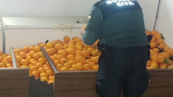 La Guardia Civil recupera 2.500 kilos de naranjas que habían sido robadas.