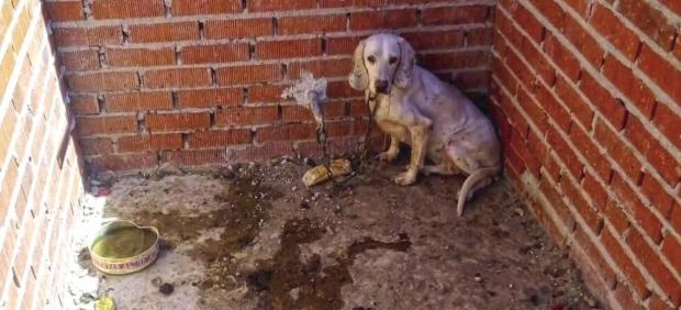 Perro maltratado
