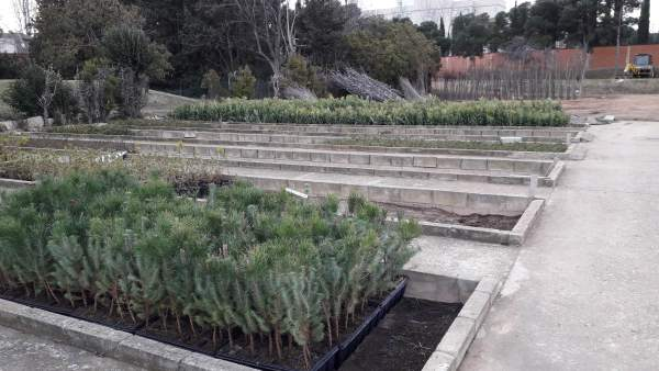 La DPZ distribuye 50.000 plantas a los municipios de la provincia