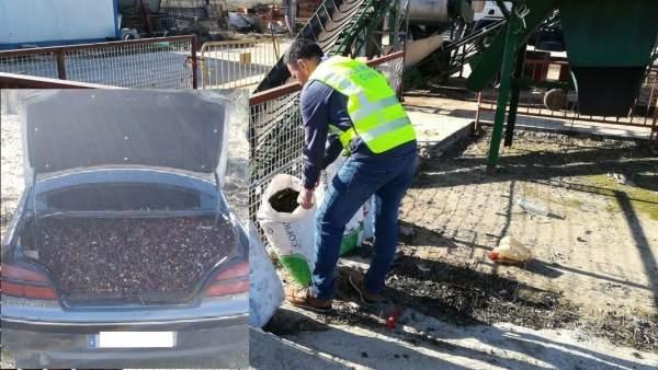 Operación contra el hurto de aceitunas
