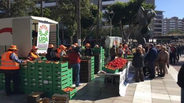 La Unión de Pequeños Agricultores reparte hortalizas en Almería