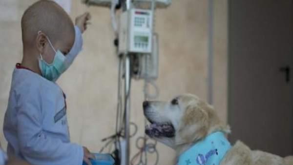 Un perro como terapia y desconexión ante una larga estancia hospitalaria
