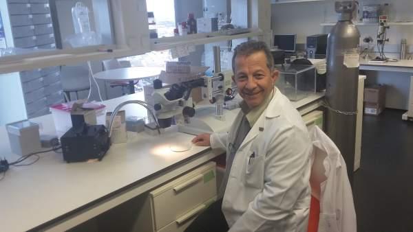 Ugrdivulga Científicos Confirman Que Consumir Melatonina Ayuda A Quemar Más Calo