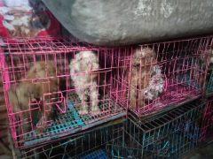 Perros confinados en jaulas