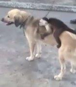Un mono abrazado a una perra