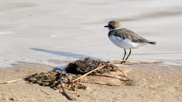 Fauna en la duna de Valdevaqueros de Tarifa