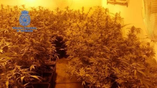 Marihuana en Elda