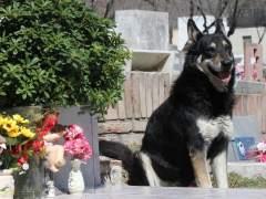 Muere el perro que veló durante una década la tumba de su amo