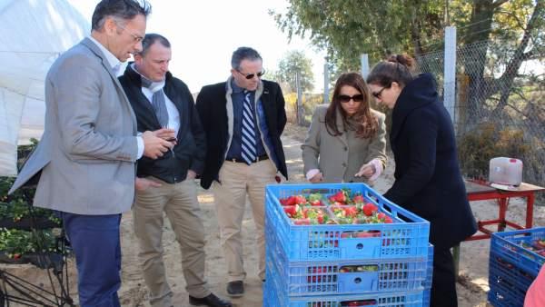 Grupo de contacto de la fresa de Francia, Italia y España, en Huelva.