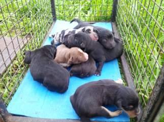 Cachorros rescatados en la basura