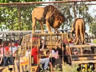 Un zoo al revés