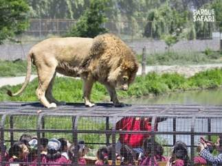 Rehabilitación de animales