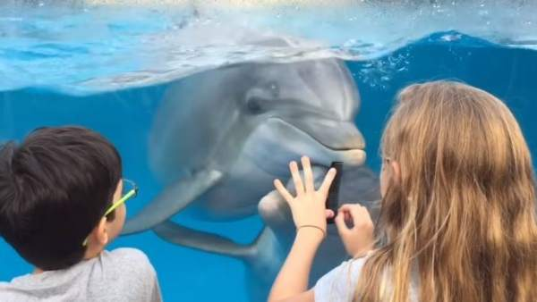 Un peine, lo único que necesitó esta niña para llamar la atención de los delfines