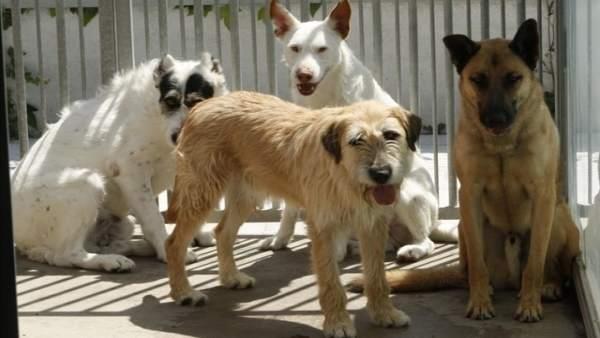 Perros en el zoosanitario de Sevilla